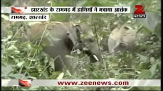 Zee News: Elephants create havoc in Jharkhand's Ramgarh