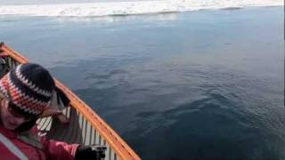 Bowhead Whales Almost Hit Canoe and Swim Underneath