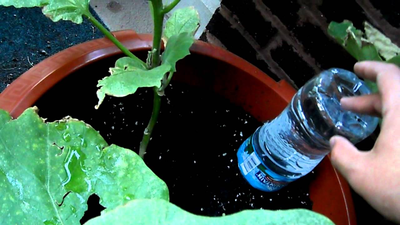 Plant Watering System Made From Totes 78