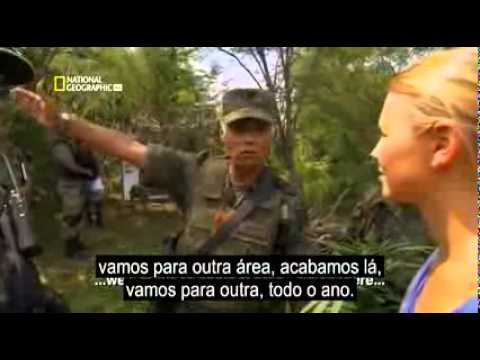LUXURY OF DRUG DEALERS OF MEXICO - SCRIBE VALDEMIR