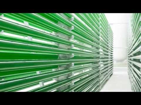 Biofuels Energy Production