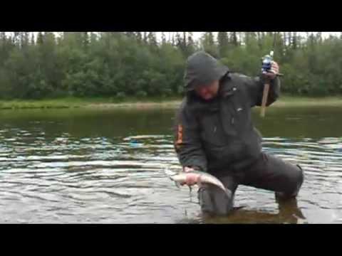 рыбалка на яйве видео