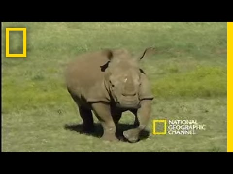 Saving the Black Rhino | National Geographic