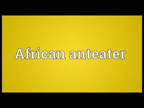 Header of African anteater