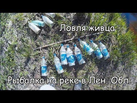 ловля пластиковыми бутылками на живца