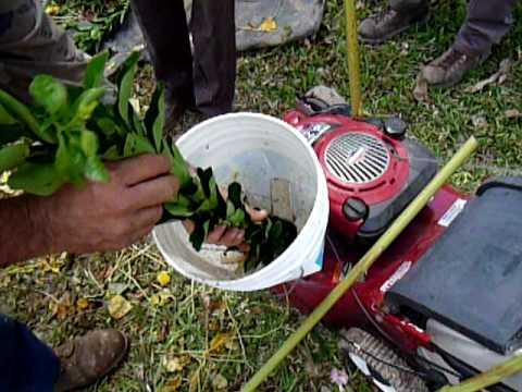Mulcher trituracion para compostas caseras youtube - Trituradora de ramas casera ...
