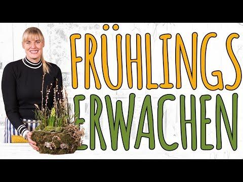 Frühlingserwachen - Moos Schale DIY