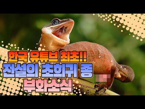 한국 유튜브 최초! 전설의 초희귀종 부화소식