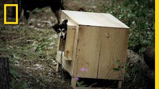 Sled Dog Houses - Thaw Project   Life Below Zero