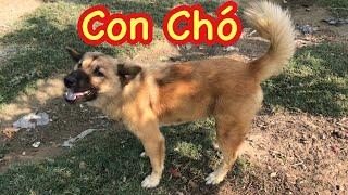 Baby Watching Funny Dog ♥ Bé Xem Con Chó ♥ Bốp Kids TV