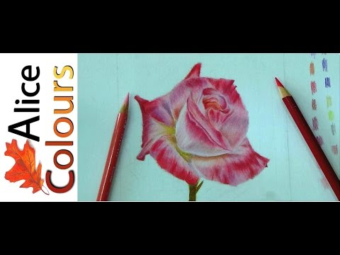 draw a rose in colored pencils