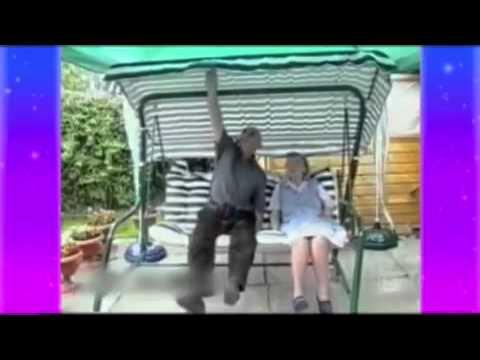Videos de risas caídas