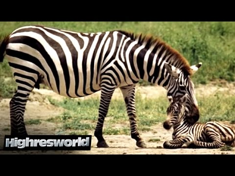 100 Tiere unserer Erde (Dokumentarfilm in voller Länge, Doku komplett deutsch, kostenlos) *HD*