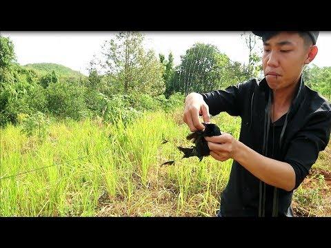 Giăng Lưới Tàng Hình Bẫy Chim - Cách Giăng Lưới Tàng Hình Bẫy Chim - Thần Nông