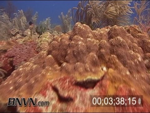 7/2/2004 Footage from Sherwood Forest, Dry Tortugas National Park
