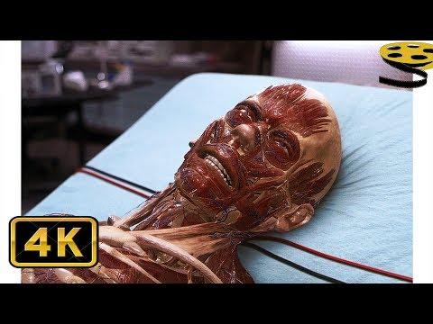 Себастьяну Кейну вводят Сыворотку Невидимости | Невидимка | 4K ULTRA HD