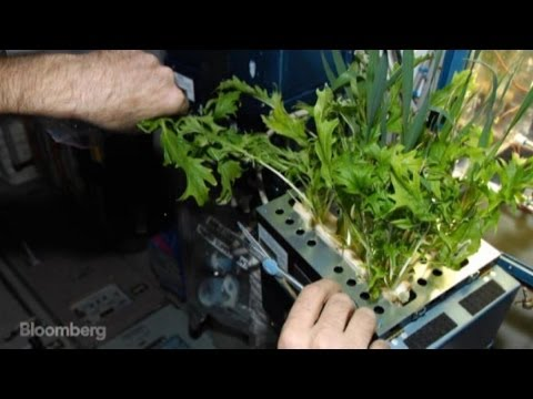 Salad in Space: Can NASA Grow Food in Zero Gravity?