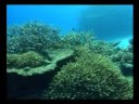 Reef Check Australia: The Reef Needs You.....Tube