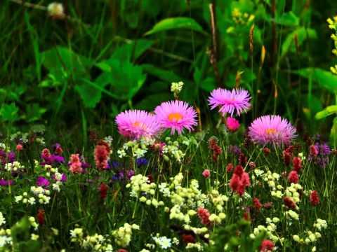 Georgian Flowers and Nature