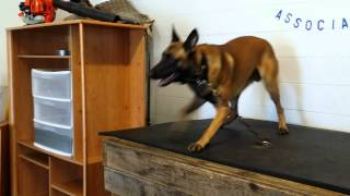 Protection Dog Training Using a Clatter Stick