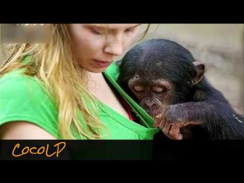 Funny Videos 2016 New   Best Of The Year Whatsapp Funny Videos   Try Not To Laugh   YouTube 360p