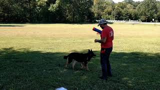 Product review : Nerf Dog Tennis Ball Blaster