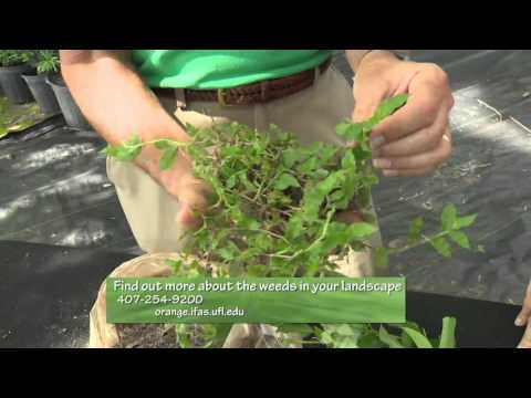 Central Florida Gardening   2 Min Pests   Weeds