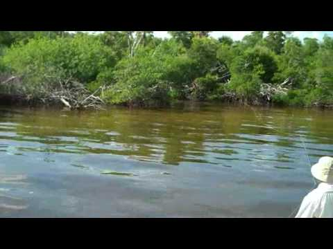 Boca Grande Chronicles Sight Fishing Snook & Reds Part 2