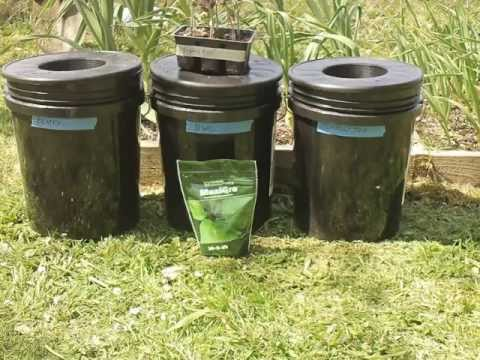 Kratky Method-DWC-Compost Tea Hydroponic Experiment. Hydroponic Tomatoes