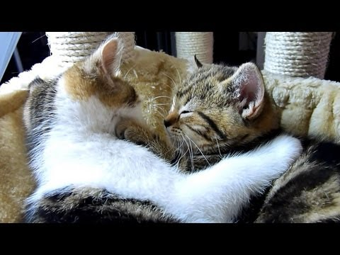 How to become a good boyfriend - 12 tips from  kitten Rocky. Funny Cats