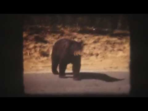 1948 Hand Feeding Bears in Yellowstone National Park Full Color 8mm Film