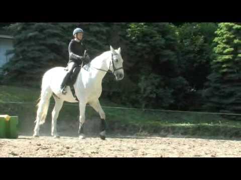 Reiterpension Marlie – Urlaub und Reitunterricht bei einem Pferdeflüsterer