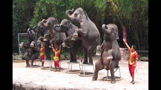 download lagu Elephant Show Taman Safari Cisarua Indonesia Part 1 - gratis