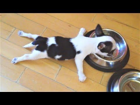 Приколы про собак и Новые Приколы с животными подборка 2018 Очень смешные и милые животные на видео