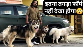 BEST DOG KENNAL Alaskan Malamute Siberian Husky At The Dogfather Dog Price in India