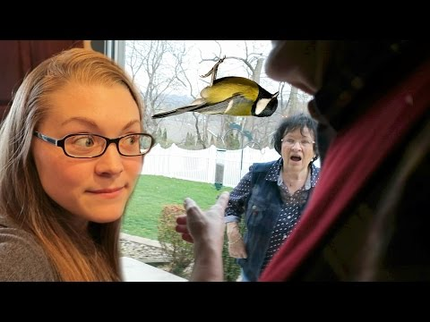 DEAD BIRD GRANDPARENT PRANK (11.25.16)