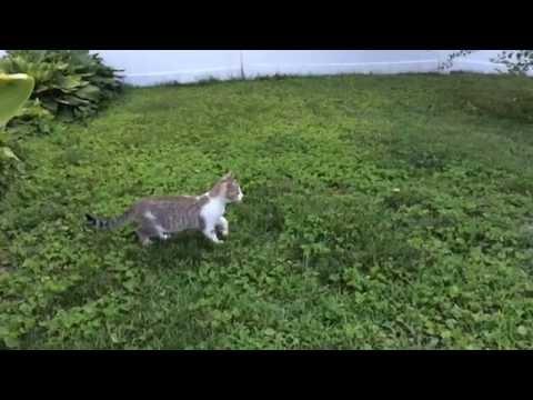 2匹の子猫のジャンプアタ...