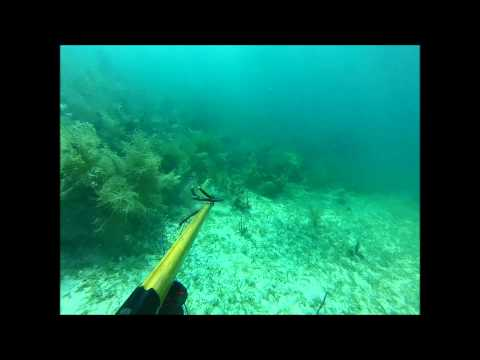 Spearfishing In Miami