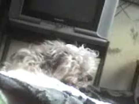 mascota graciosa Titi y el despertador 1