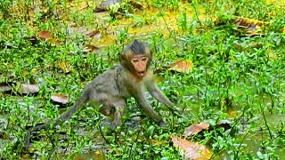 Baby Lori and Mommy Amari After The Raining,|They Are Finding and Catching Insects To Eat|So Hungry