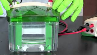 Using a Micropipet