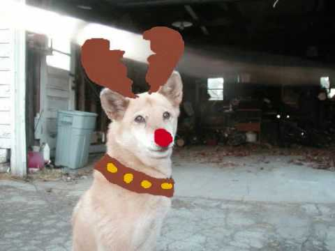 christmas dogs singing jingle bells