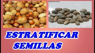 Como Estratificar Semillas // How to stratify Seeds
