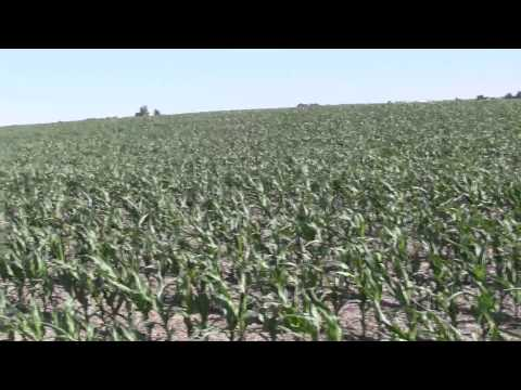 Farms.com Special Grain Report: Mid-West Crop Tour