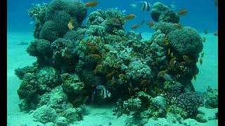 Watch Atb Underwater World video