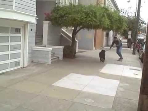 Dog-Powered Longboard -- aka Dogboarding!