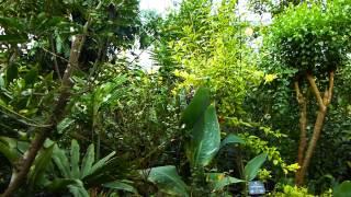 #7799, Plantas y arbustos tropicales [Raw], Plantas y naturaleza
