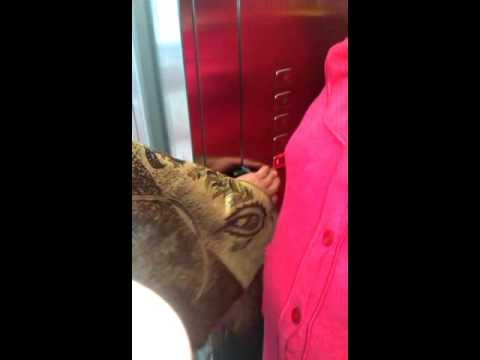 Лифт самокат в санатории
