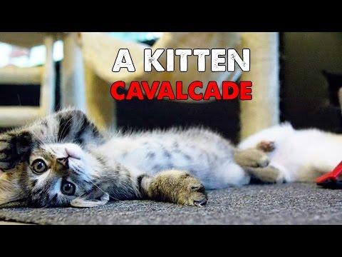 Daily Big Cat 9-14-14 - A Kitten Cavalcade