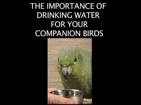 The Importance of Drinking Water for your Companion Birds